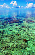 Jenny Rainbow - Coral Reef Near the Island at Peaceful...