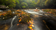 Fishing Creek Framed Prints - Corkscrew Falls on Autumn Morning Framed Print by Matt Tilghman