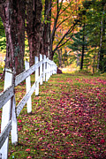 White Fence Posters - Country Lane Fall Foliage Vermont Poster by Edward Fielding