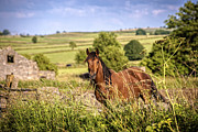 Moorland Posters - Countryside Horse Poster by Christopher and Amanda Elwell