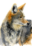 Fray Prints - Coyote Print by Carlo Ghirardelli