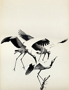 Cranes Drawings Framed Prints - Cranes Framed Print by Mamoun Sakkal