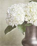 Flowers In Vase Framed Prints - Cream Hydrangea in a Bronze Vase Still Life Framed Print by Lisa Russo