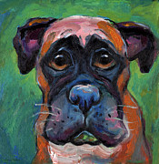 Boxer Drawings Posters - Cute Boxer puppy dog with big eyes painting Poster by Svetlana Novikova