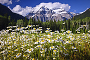 Peaks Photo Posters - Daisies at Mount Robson Poster by Elena Elisseeva