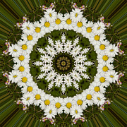 Mandala Photos - Daisy Chain Mandala Series Number 12 by Carrie Cranwill