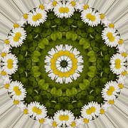 Mandala Photos - Daisy Chain Mandala Series Number 9 by Carrie Cranwill