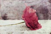 Contemporary Art Photos - Decor Poppy Horizontal by Priska Wettstein