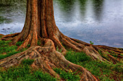 Dan Carmichael - Deep Roots - Tree on North Carolina Lake