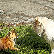 Dog And Cat Discuss Fine Art Print by Artist and Photographer Laura Wrede