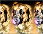 Dogs Digital Art Originals - Dog by Daniel Janda