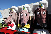 Wingsdomain Art and Photography - Doggie Diner Dogs - 5D20937