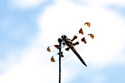 Jeff Holbrook - Dragon Fly on Antenna