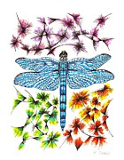 Dragonfly Drawings Framed Prints - Dragonfly Framed Print by Karen Sirard