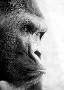 Ape Photo Originals - Dream by Loic  GIRAUD
