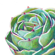 Succulent Prints - Dreams To Come Print by Athena  Mantle