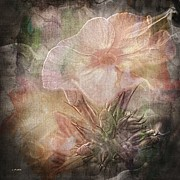 Phlox Digital Art - Dreamy Flower by Janice Austin