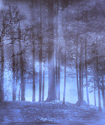 Dream Scape Posters - Dreamy Forest Poster by Scott Hervieux