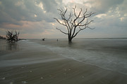 Botany Bay Plantation Posters - Driftwood Dawn Poster by Doug McPherson