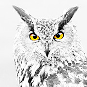 Colour Pop Posters - Eagle Owl Eyes Poster by Karl Wilson
