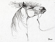 Horse Drawings - Emon Polish Arabian Horse Drawing by Angel  Tarantella