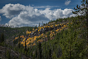 Roger Mullenhour - Fall Color in Yellowstone