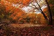 Warwick Photo Prints - Fall Escape Print by Lourry Legarde