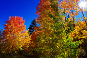 Aspen Fall Colors Photos - Fall Foliage Palette by Scott McGuire