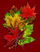 Photograph Art - Fall Leafs Art by Mario  Perez