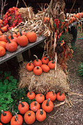 Fall Colors Autumn Colors Posters - Fall Pumpkins Poster by John Rizzuto