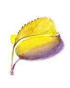 Illustration Framed Prints - Fallen Leaf Yellow Shadows Framed Print by Irina Sztukowski