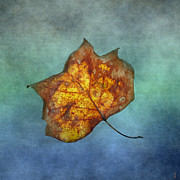Earth Tone Photo Prints - FALLEN Yellow Leaf Print by Jai Johnson