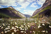 Sandra Cunningham - Field of wild flowers with Rocky...