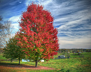 Fiery Red Posters - Fiery Red Maple Poster by Jaki Miller