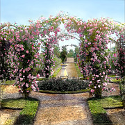 Bush Photos - Floral Arch by Terry Reynoldson