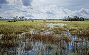 Marshland Framed Prints - florida Everglades 0177 Framed Print by Rudy Umans