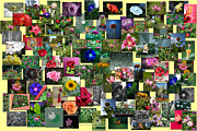 Coller Posters - Flowers Collage Horizontal Poster by Thomas Woolworth