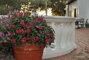 Potted Flowers Prints - Flowers on Jekyll Island Crane Cottage Patio Print by Bruce Gourley