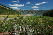 Larry Moloney Prints - Flowers on the Palisades Resevoir Idaho Print by Larry Moloney