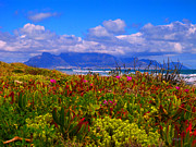 Clouds Photographs Originals - Flowers Table Mountain by Charl Bruwer