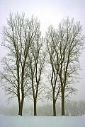 Steve Ohlsen Metal Prints - Foggy Morning Landscape 20 Metal Print by Steve Ohlsen