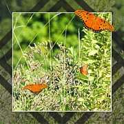 Lafayette Digital Art Prints - Fritillary Fly Away Print by Walter Herrit