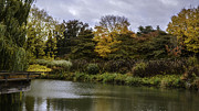 Chicago Botanic Garden Framed Prints - Garden Autumn Colors Framed Print by Julie Palencia