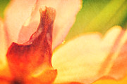 Photographic Print Prints - Garden Flower Abstract 1 Print by Natalie Kinnear