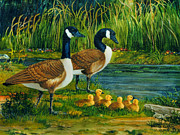 Canadian Geese Paintings - Geese by Wanda Coffey