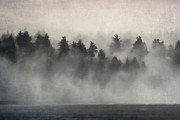 Pine Trees Metal Prints - Glimpse of Mist and Trees Metal Print by Carol Leigh