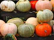 Colors Of Autumn Originals - Glistening Gourds by Ira Shander