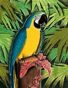 Jeanette Kabat - Gold and Blue Macaw