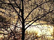 Branches Photos - Gold Sunset  by Roxy Riou