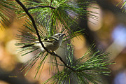 Pine Needles Digital Art Framed Prints - Golden-Crowned Kinglet Framed Print by Christina Rollo